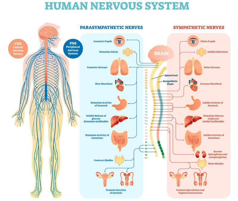 How To Repair Nerve Damage & Dissolve Blood Clots